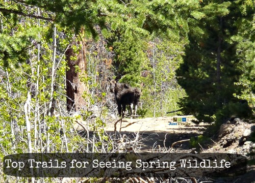 Top Trails for Spring Wildlife